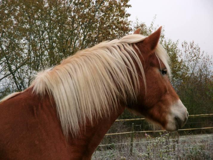 unperfekte-pferdehalter