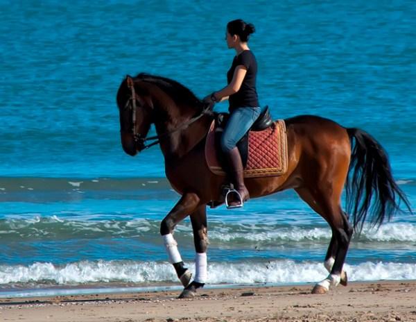 Clases de equitacion Gandia