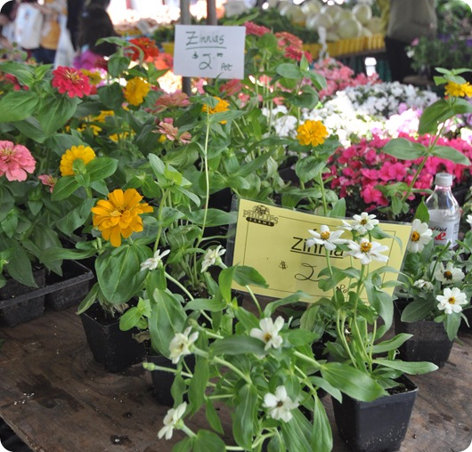 farmers market flowers