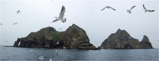 Seagulls apparently comprise the majority of Takeshima/Dokdo's population