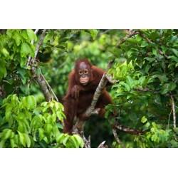 Small Crop Of Jungle Friends Primate Sanctuary