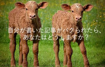 calves-813118_1280