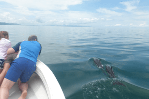 Dolphin Watching Tours Gulfo Dulce
