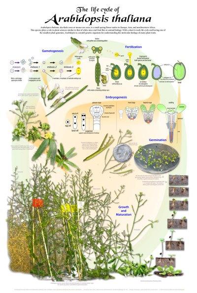 UW Botany Store   University of Wisconsin-Madison