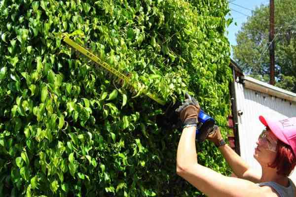 Yard and Lawn Tips For Spring Through Summer