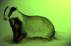 tasso verde
