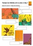 Pourquoi les libellules ont le corps si long ?-Ateliers1