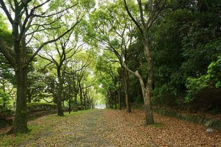 tomiokahachiman-park6
