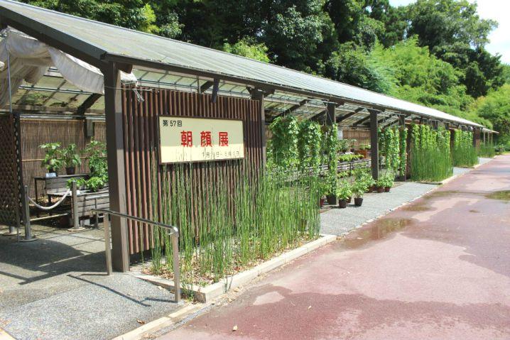 kyotofuritsushokubutsuen13