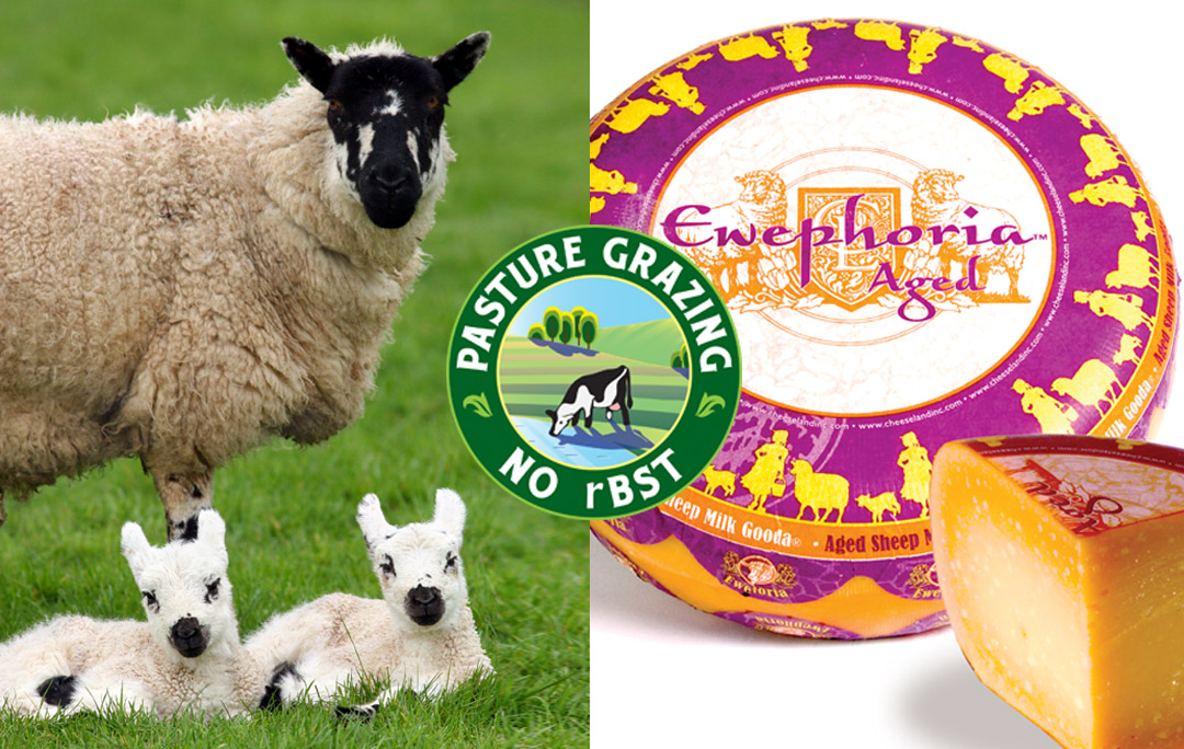 ewephoria sheep milk gouda grass fed