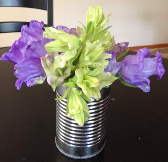 Campanula Cup and Saucer Extras Bouquet