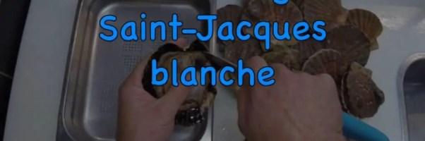 decorticage saint-jacques
