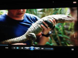Back-legless iguana uses 3-D prosthetic