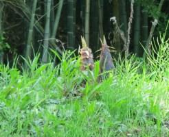 竹の駆除 除草剤