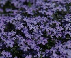 flowers-604016_640