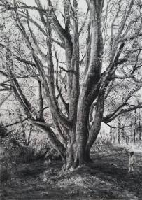 """Memory Tree"" by Michael Wann at the Chimera Gallery, Mullingar, County Westmeath Ireland"