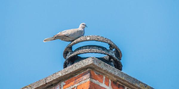 chimney-cap-Article-Image-2