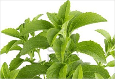Dried-Stevia-Leaves_bd-lg