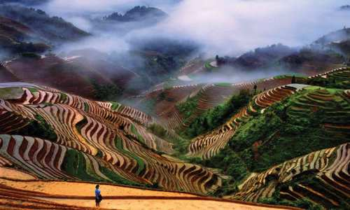 Rice-Terraces-Longsheng-Guangxu-China