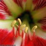 flor-de-mal-china-009