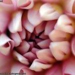 flor-de-mal-china-017