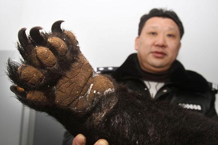bear-title