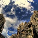 wild-stone-forest