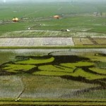 05Rice-paddy-art-from-China