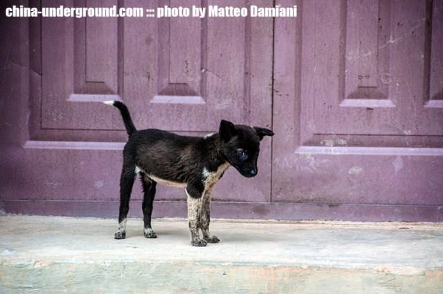 kunming-dog
