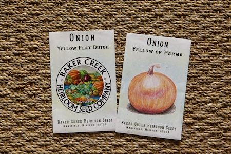 seeding onions 4