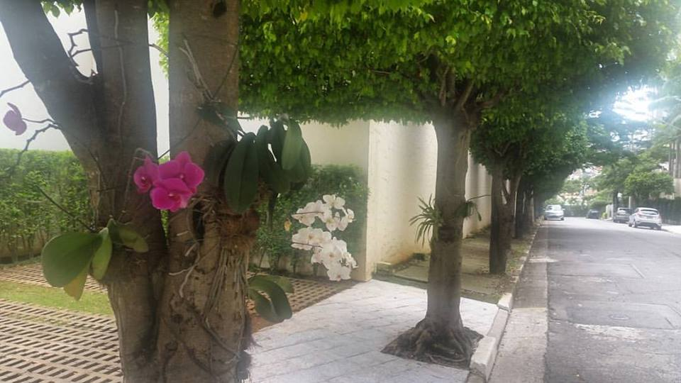 Plantio de Orquídeas no Mutirão da Chácara Klabin
