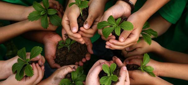 Escola: em prol da cultura da sustentabilidade