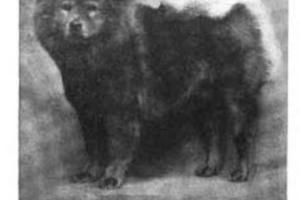 1911 Foo Shan Hutton Win Sum English Ch.