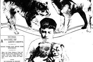 photo-8-dogs-import-china-judge-james
