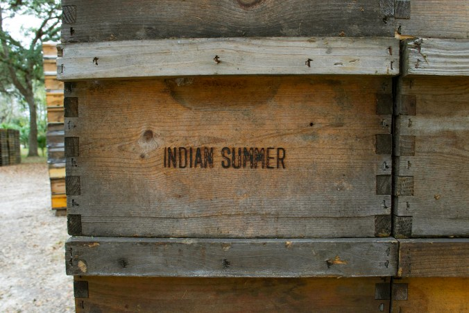 Indian Summer Behives collect yummy honey. The Indian Summer Honey company migrates from Florida to Wissconsin and then back again to take advantage of prime honey making weather. Photo taken on December 11, 2016, at Indian Summer Honey Farm, by Chrissy Clary.