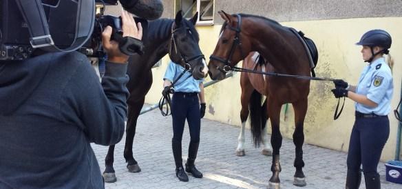 Zwei Pferde Schnauze an Schnauze vor laufender Kamera