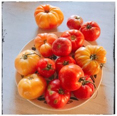 tomatoes for jam