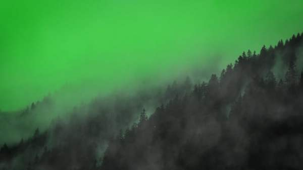 Fog Motion