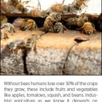 Bee Die-Off