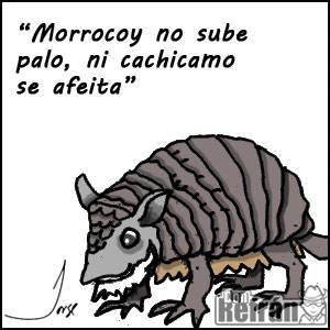 morrocoy-no-sube-palo-ni-cachi-550-0