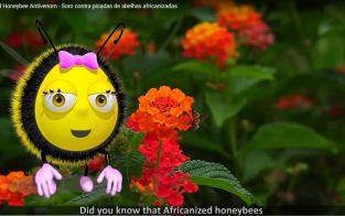 video_abelha