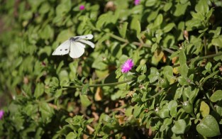 butterfly-1148848_960_720