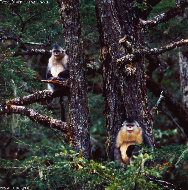 scimmia-naso-patata-2
