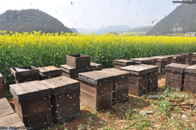 luoping_flowers_yunnan_009