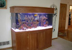 Saltwater Aquarium Cleaning Service | Cincinnati Aquarium