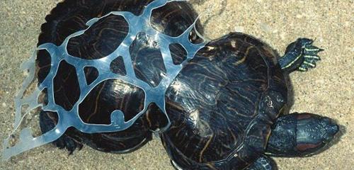 tortuga-deforme-plastico