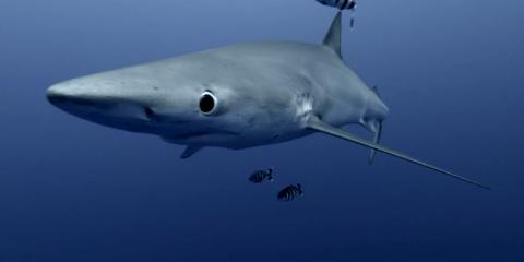 Sony F55 Camera Underwater Footage is Pretty Smick