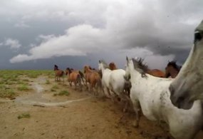 GoPro- Behind the Adventure Of Wild Mustangs from GoPro- ChrisEditing