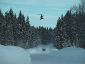Highspeed hunting in the forrest from Moviebird
