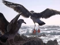 Sony RX100 IV & RX10 II Cameras Super Slow Motion Seagulls